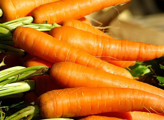 Zanahoria Organica Tienda Botanicas Santa Ana Последние твиты от zanahoria mecánica(@zanahoriatw). zanahoria organica